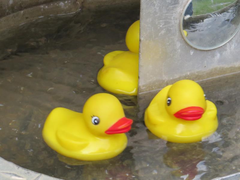 Triple T Amusements Lucky Duck - Lucky Ducks